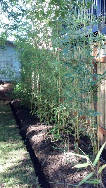 BAMBOO PLANTING AND CONTROL