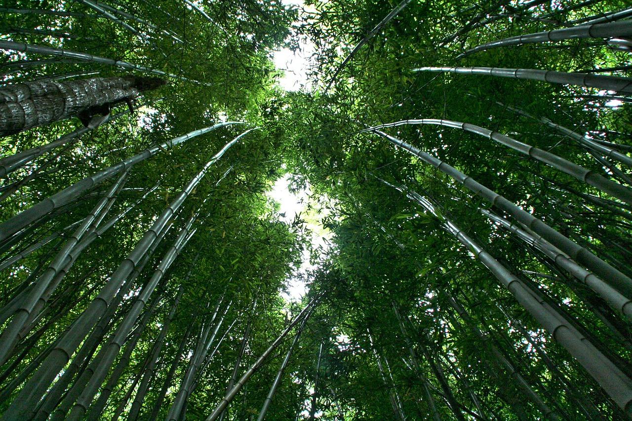 bamboo-595445_1280