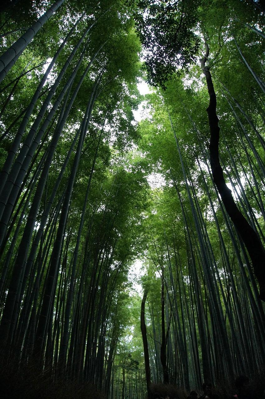 bamboo-846247_1280